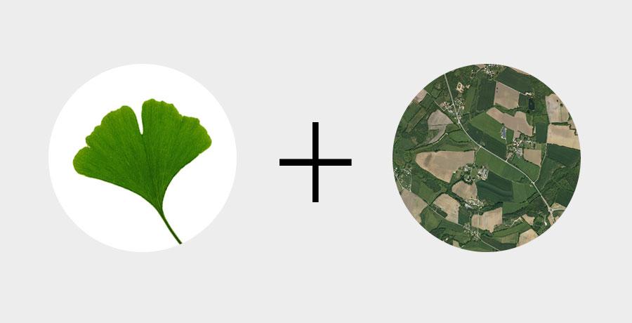 Décomposition du logo Kerflore étude. Une feuille de Ginkgo biloba et un réseaux cadastral.