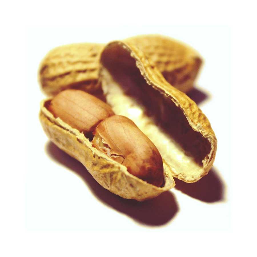 cacahuète sur fond blanc